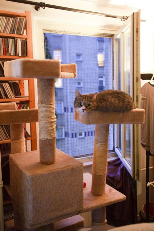 Katze auf schiefem Katzenbaum