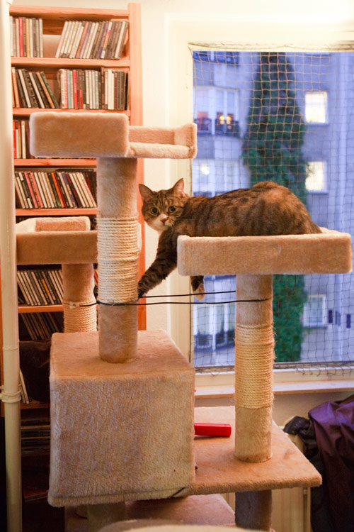 Katze spielt mit Draht