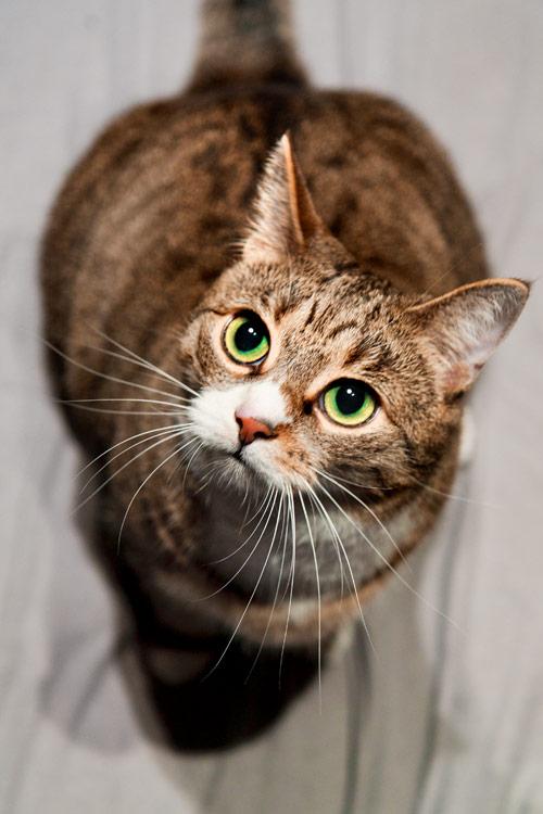 Katze schaut hoch