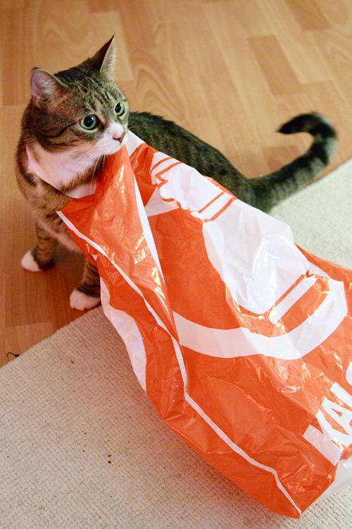 Katze beim Einkaufen