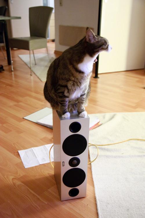 Katze gähnt auf Lautsprecher