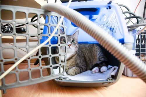 Katze hat im Kabelwirrwarr alles im Blick