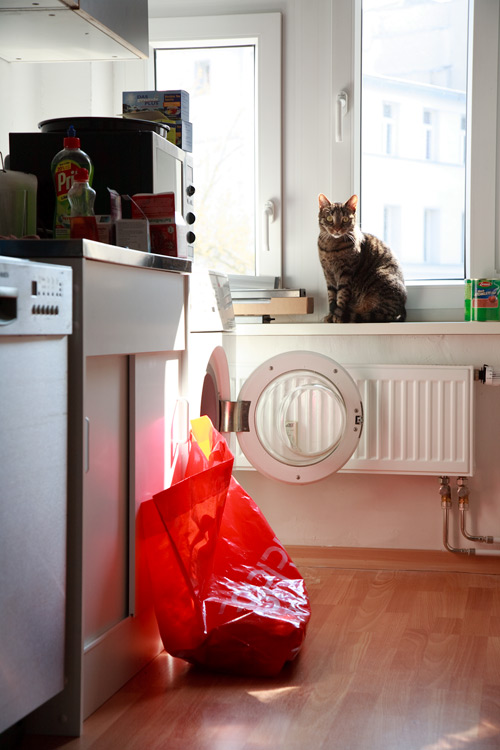 Stilleben mit Katze und Küche