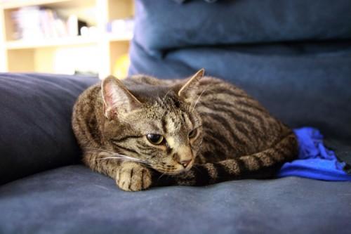 Katzeknäuel auf Sofa