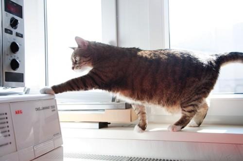 Katze schwört auf AEG Waschmaschine