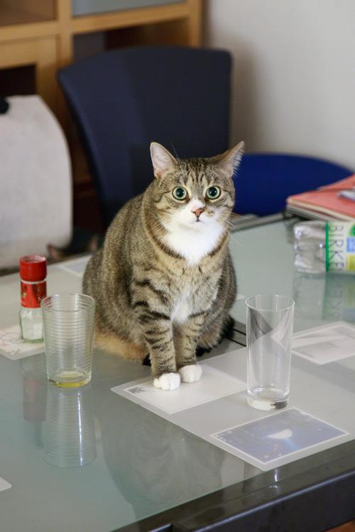 Katze sitzt auf Tisch und guckt verdutzt