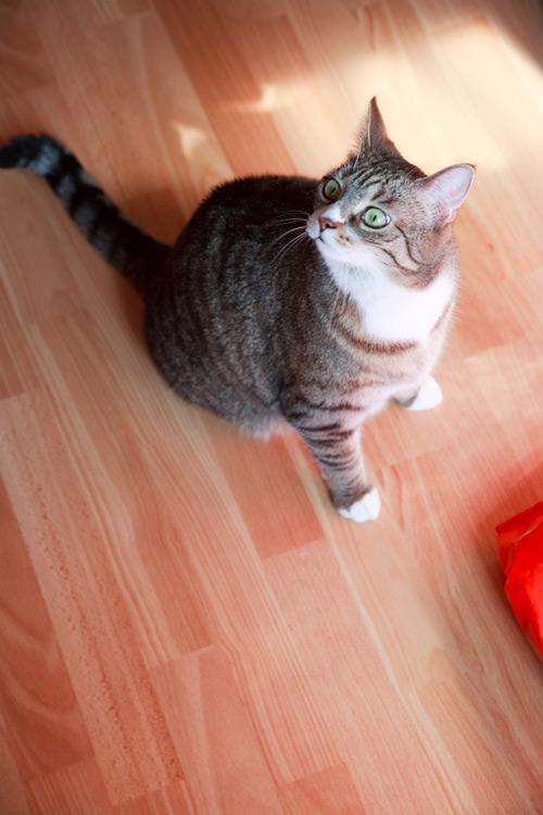 Katze wird von Außerirdischen entführt